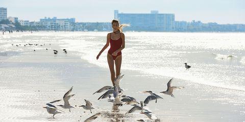 Bird, Seabird, Sea, Ocean, Gull, Vacation, Recreation, Beach, Coast, Charadriiformes,