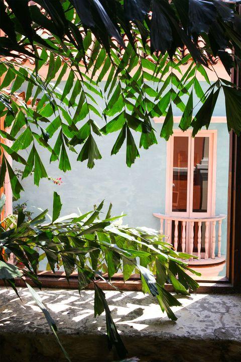 Leaf, Terrestrial plant, Plant stem,