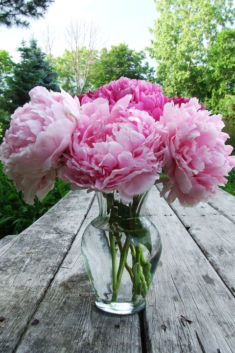 Petal, Plant, Flower, Pink, Flowering plant, Shrub, Floristry, Flower Arranging, Rose order, Vase,