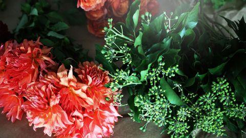 Petal, Flower, Flowering plant, Floristry, Rose family, Peach, Annual plant, Rose, Rose order, Garden roses,