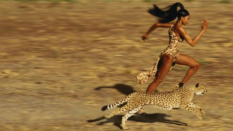 Cheetah, Felidae, Wildlife, Jaguar, Fun, Terrestrial animal, Carnivore, Big cats, Small to medium-sized cats, Leopard,