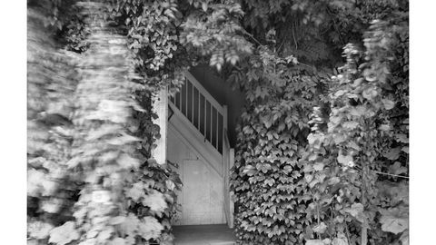 Monochrome, Leaf, Monochrome photography, Black-and-white, Door, Home door,