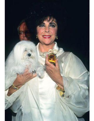 elizabeth taylor in 1993
