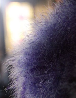 Purple, Fur, Violet, Photography, Close-up, Natural material, Animal product, Cat, Felidae,