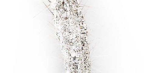 Flowerpot, Branch, White, Botany, Twig, Peach, Plant stem, Houseplant, Annual plant, Still life photography,