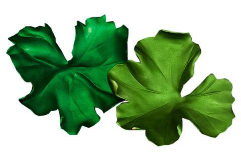 Green, Leaf, Annual plant,