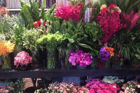 Plant, Flower, Petal, Pink, Magenta, Shrub, Purple, Floristry, Garden, Flowering plant,
