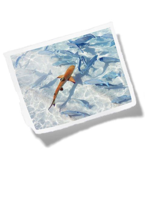 Fish, Turquoise, Aqua, Invertebrate, Marine invertebrates, Ray-finned fish, wild carrot, Arthropod,