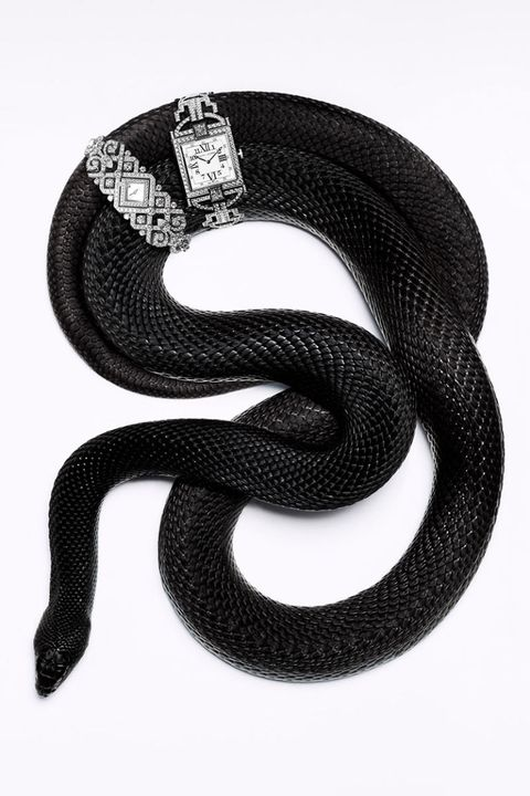 Reptile, Style, Pattern, Snake, Font, Scaled reptile, Black-and-white, Serpent, Monochrome, Monochrome photography,