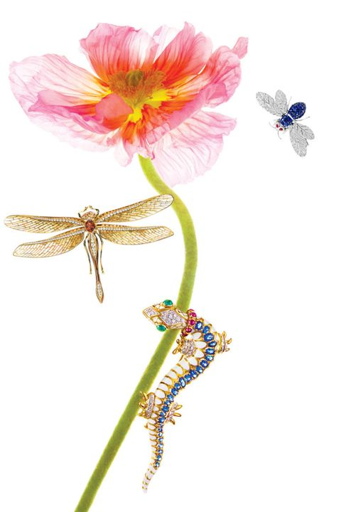 Petal, Flower, Botany, Flowering plant, Invertebrate, Wing, Plant stem, Dragonflies and damseflies, Peach, Insect,