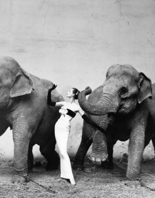 dovima with elephants