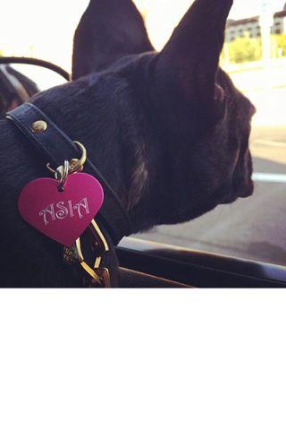 Collar, Carmine, Black, Carnivore, Costume accessory, Heart, Snout, Terrestrial animal, Dog, Love,