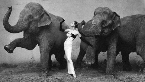 Elephant, Elephants and Mammoths, Indian elephant, Organism, Skin, Vertebrate, Standing, Photograph, Working animal, Terrestrial animal,