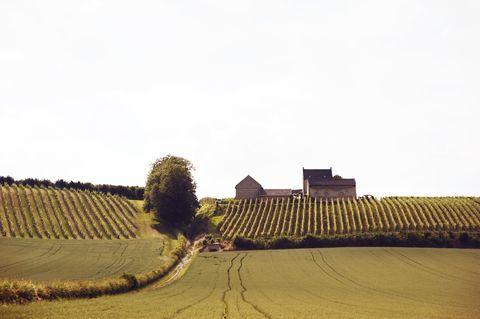 Landscape, Field, Farm, Agriculture, Soil, Roof, Land lot, Plantation, Rural area, Crop,