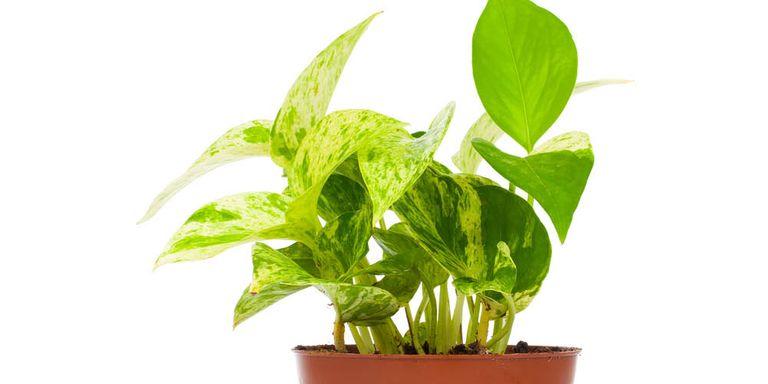 Deze planten bevorderen je nachtrust