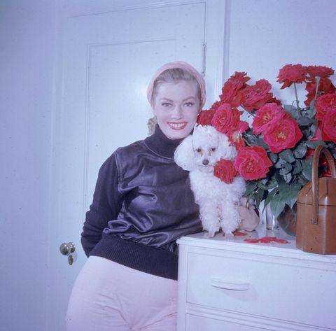 Anita Ekberg hond dog