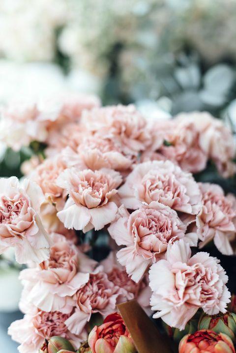 Flower, Pink, Petal, Plant, Cut flowers, Carnation, Bouquet, Floral design, Flowering plant, Peach,