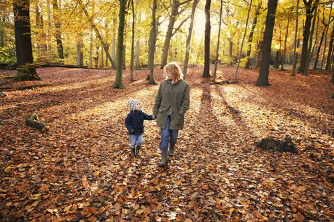 People in nature, Leaf, Tree, Natural landscape, Deciduous, Autumn, Forest, Woodland, Natural environment, Sunlight,