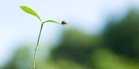 Green, Leaf, Soil, Macro photography, Plant, Organism, Close-up, Plant stem, Grass, Insect,