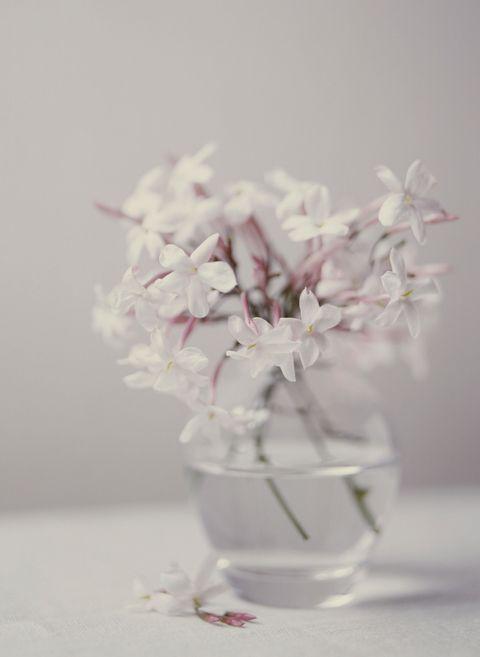 <p>就如同薰衣草一般,素馨花的香氣亦為天然的放鬆劑;而它清新亮麗的外型,更使得它成為妝點臥房的好夥伴。<br></p><p>而照料它的關鍵在於充沛的光照,以及適量的水分,千萬不得過度澆水!</p>