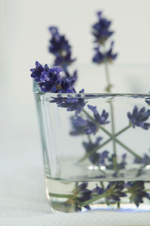 <p>提到助眠植物,相信許多人第一個想到的就是薰衣草;大量的研究報告均顯示,這種美麗的紫色小花能夠幫助我們鎮靜與放鬆,也因如此,它時常被添入精油、香氛甚至洗滌劑裡。比起常見的乾燥花,活的薰衣草有著更為顯著的香氣,所以,不妨在你的房間種些新鮮的薰衣草,讓它療癒、舒服的香味伴你入夢。</p><p>值得注意的是,薰衣草需要充足的日照,因此,有陽光照射的窗台會是它最佳的擺放位置。</p>