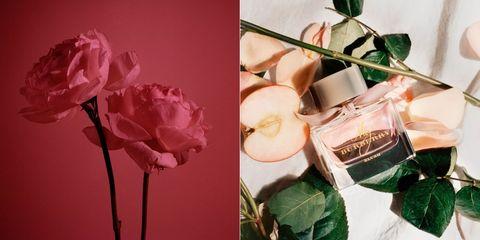 Flower, Pink, Garden roses, Rose, Cut flowers, Petal, Plant, Rose family, Still life photography, Flower Arranging,