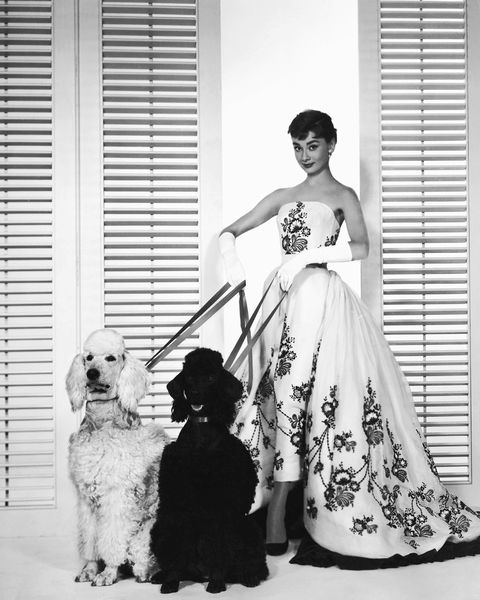 Dog, Canidae, Dress, Gown, Bridal party dress, Wedding dress, Black-and-white, Sporting Group, Vintage clothing, Dog breed,
