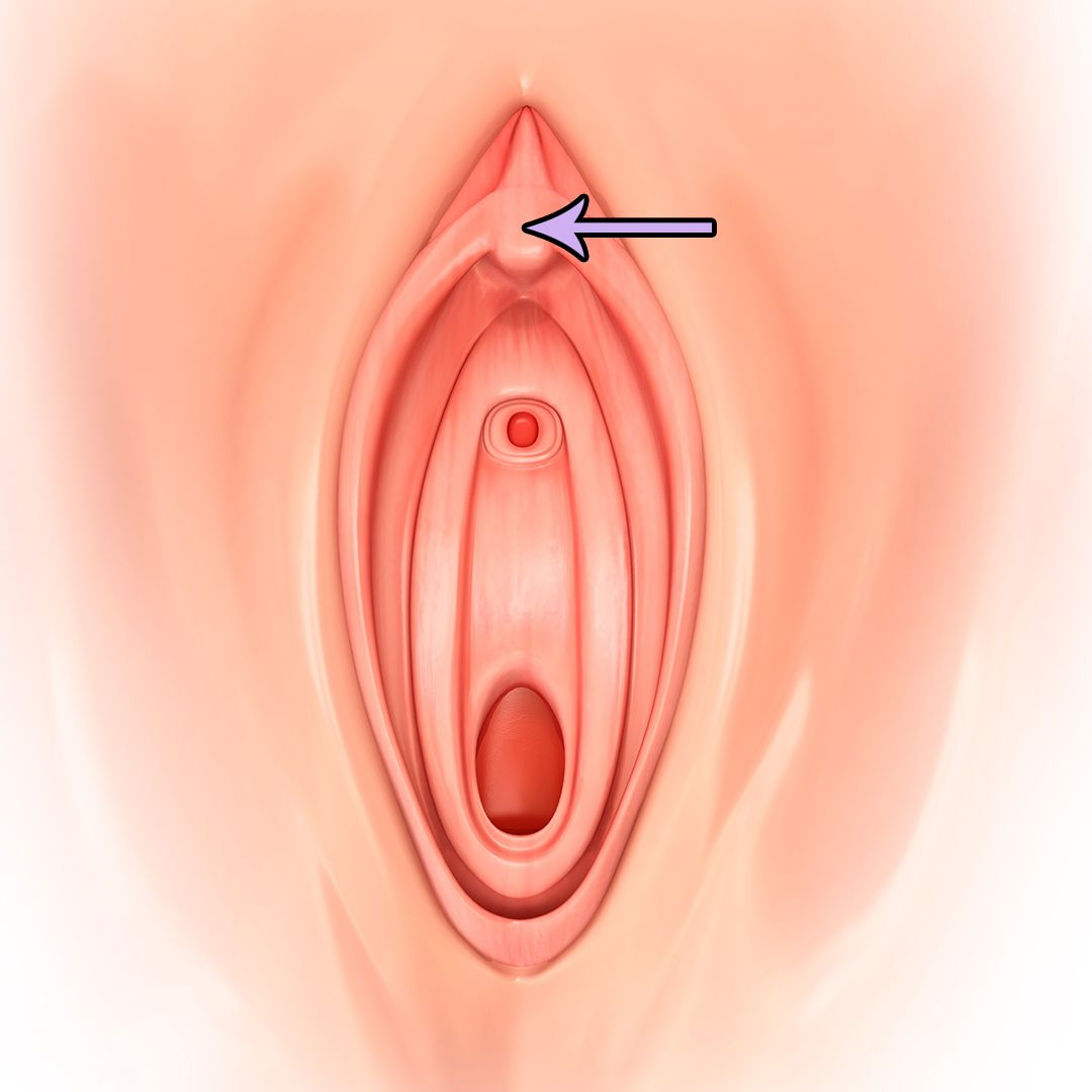 Images of clitoris