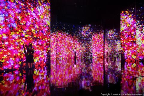 史上最美互動展teamlab回來台灣了!700坪未來遊樂園、九大展區、超酷藝術變革,2021夏天必去展覽