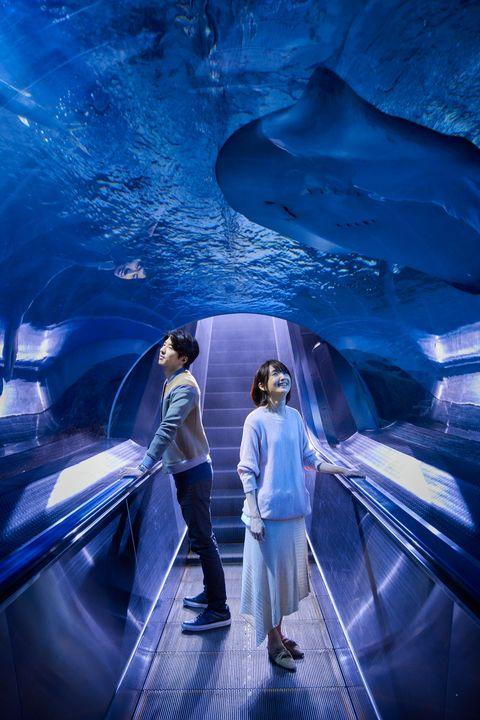 Blue, Ice cave, Architecture, Fun, Glacial landform, Aquarium, Electric blue, Photography, Escalator, World,