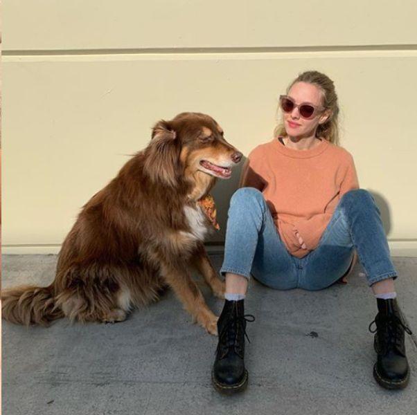 好萊塢明星的防疫狗伴