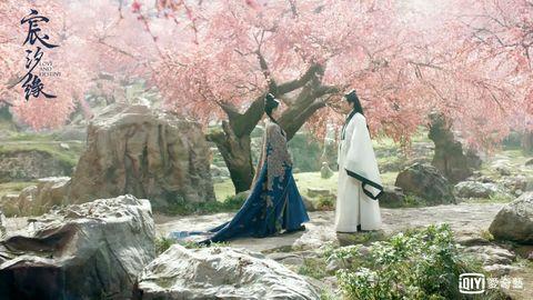 Tree, Cherry blossom, Spring, Plant, Flower, Blossom, World,