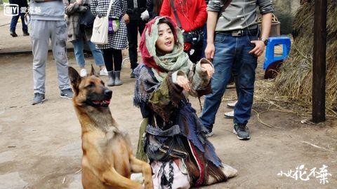 Dog, Canidae, Dog breed, Kunming wolfdog, Carnivore, Police dog, Companion dog, German shepherd dog, Street dog, Fawn,