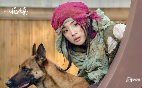 Canidae, Dog, Fur, German shepherd dog, Headgear, Fawn, Wolfdog, Smile, Kunming wolfdog, Dog breed,