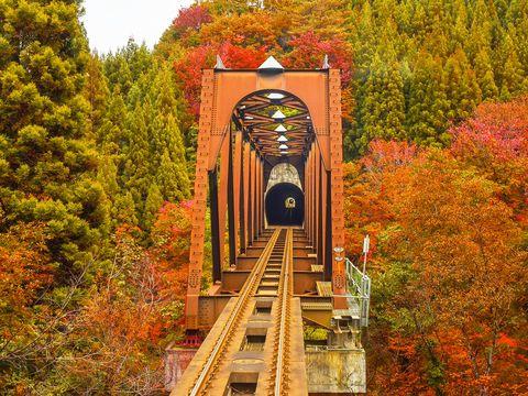 Transport, Leaf, Autumn, Tree, Bridge, Plant, Landscape, Track, Vehicle, Nonbuilding structure,