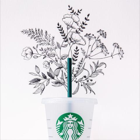 Flowerpot, Botany, Plant, Flower, Drawing, Line art, Plant stem, Illustration,