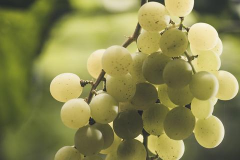 台灣在地葡萄釀造!威石東酒莊2021秋季新酒登場,完整亮點+價格一次看