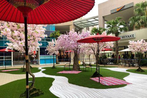 櫻花,日式庭園,野餐,林口三井Outlet,台北賞櫻