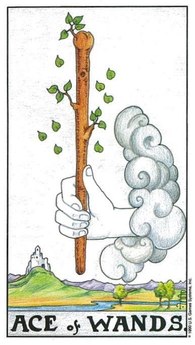 Plant, Plant stem,