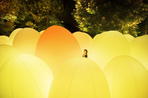 teamlab進駐京都世界遺產東寺 「teamlab東寺:光之祭」