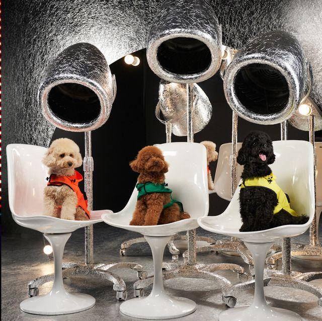 【米蘭時裝週】羽絨衣大王MONCLER就是狂 !聯手RIMOWA打造跑馬燈行李箱、小狗專屬寵物羽絨衣