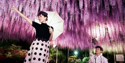 Purple, Pink, Violet, Lavender, Tree, Spring, Flower, Plant, Fun, Photography,