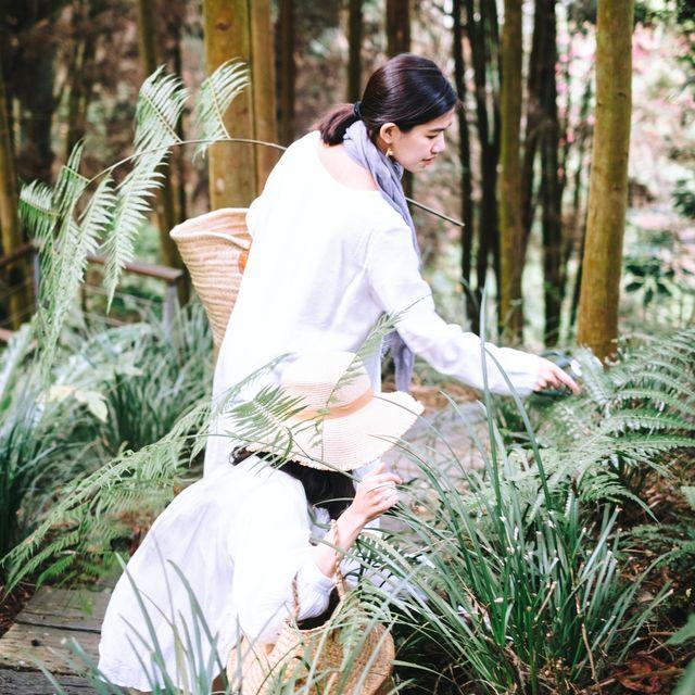 薰衣草森林, 植物採集, 森林冥想