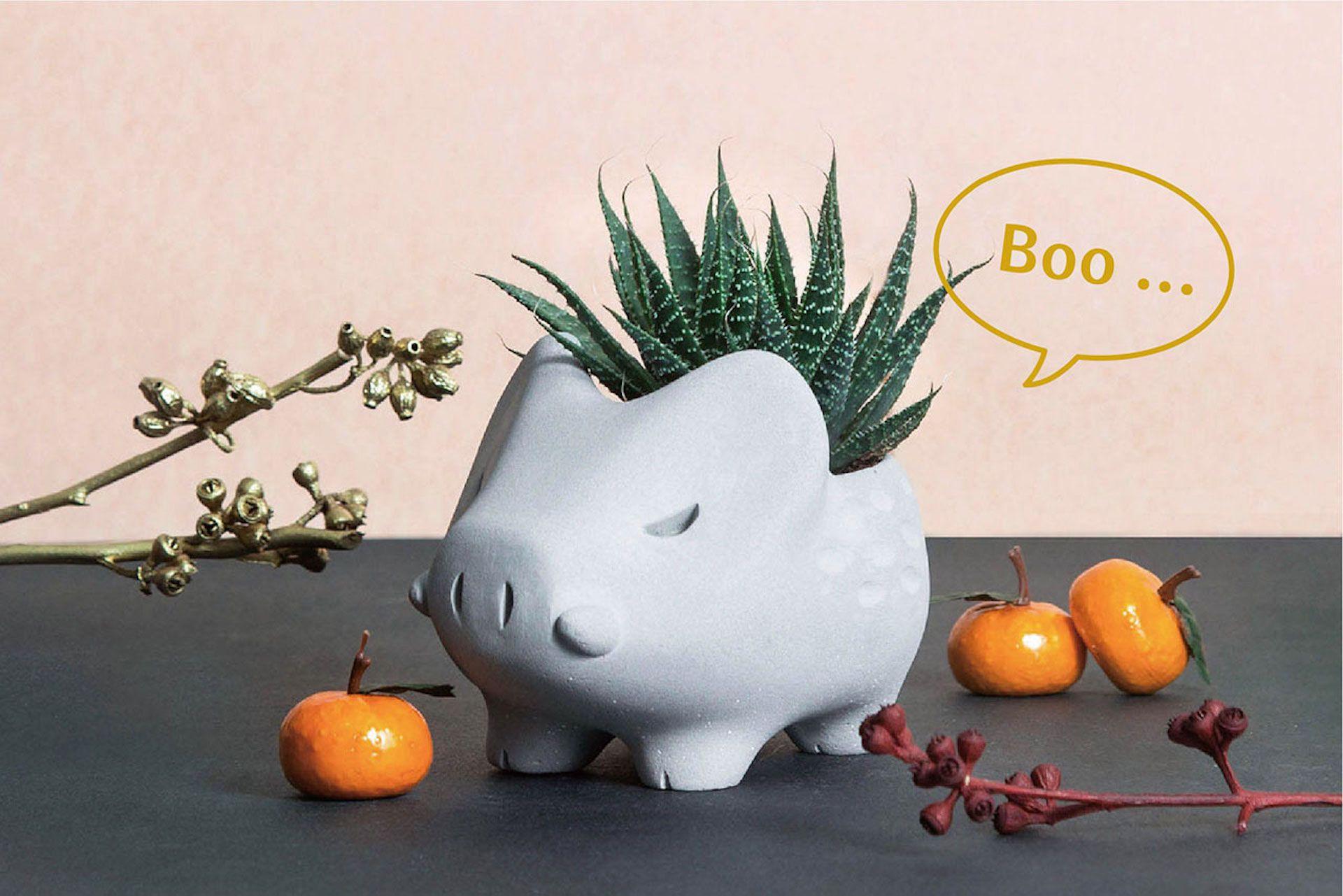 辦公室招財,防小人,多肉植物,台北多肉植物,仙人掌,有肉,招財,辦公室防小人
