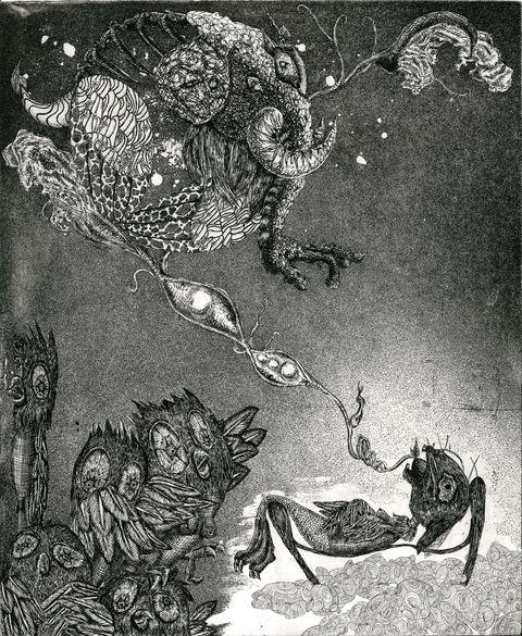 Illustration, Organism, Art, Printmaking, Monochrome, Toad, Plant, Amphibian, Drawing,