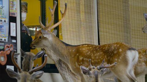 在世界地球日這天,《這一年,地球變得不一樣》紀錄「奈良公園小鹿」少了我們的美好確幸