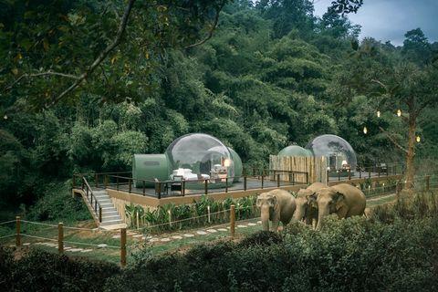體驗在雨林和大象共眠!泰國安納塔拉度假酒店推出「雨林泡泡」豪華露營