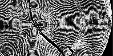 Monochrome, Black-and-white, Circle, Monochrome photography, Line, Pattern, Tree, Stock photography, Spiral, Symmetry,