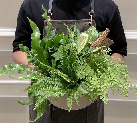 植感系防疫!給新手的「植物照顧小技巧5間直送到家花店」推薦