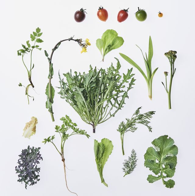 vegetabletoriyose